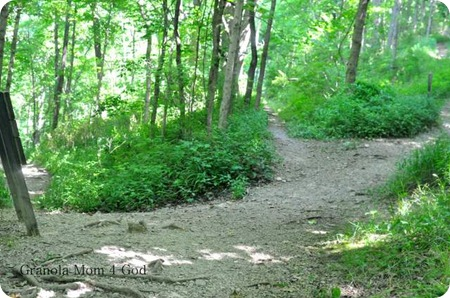 Clifty Falls diverged