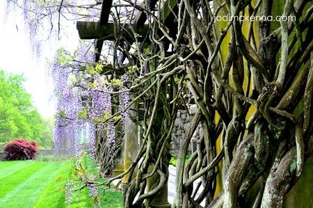 spiritual whitespace trees